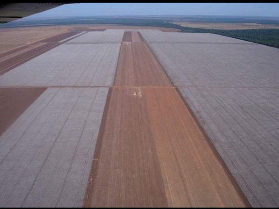 En el mundo, los cultivos transgénicos ya ocupan 100 millones de hectáreas.