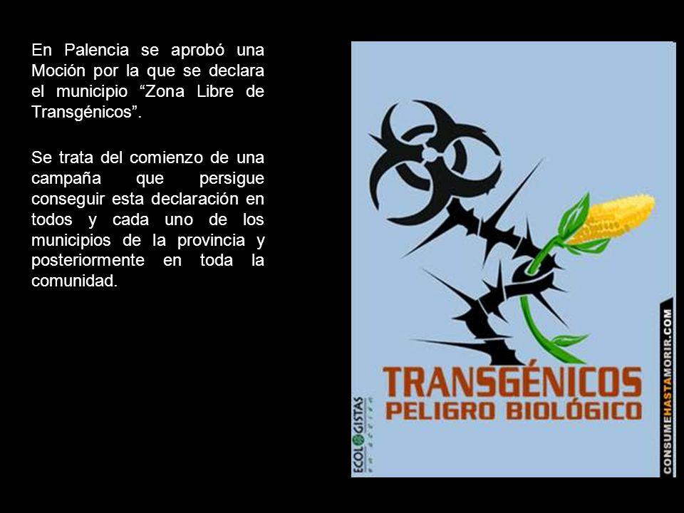 En Palencia se aprobó una Moción por la que se declara el municipio Zona Libre de Transgénicos.