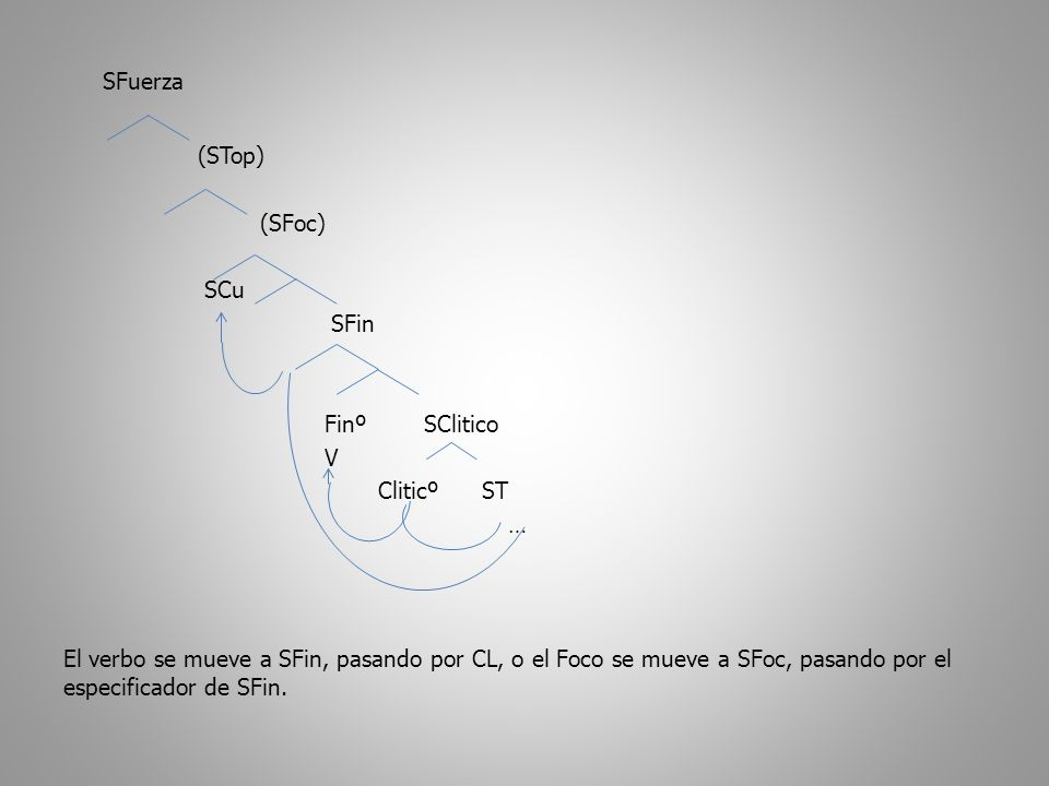 SFuerza (STop) (SFoc) SCu SFin Finº SClitico V Cliticº ST … El verbo se mueve a SFin, pasando por CL, o el Foco se mueve a SFoc, pasando por el especificador de SFin.