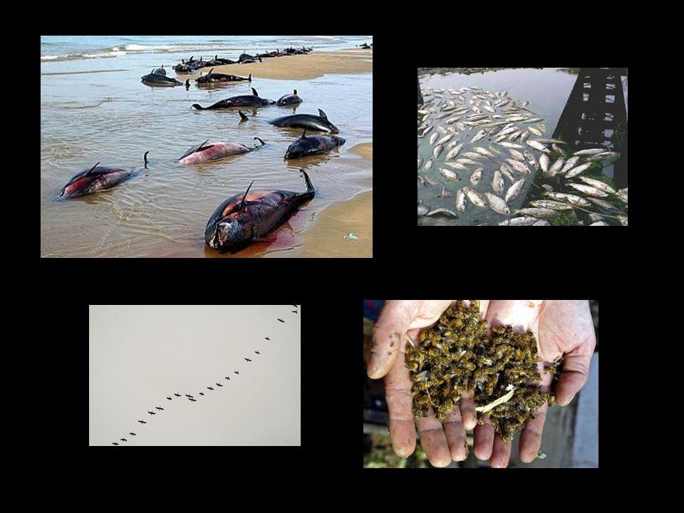 20. Acepto la destrucción de los bosques, la desaparición de los peces y de la vida en nuestros océanos. Acepto la extinción de las especies animales