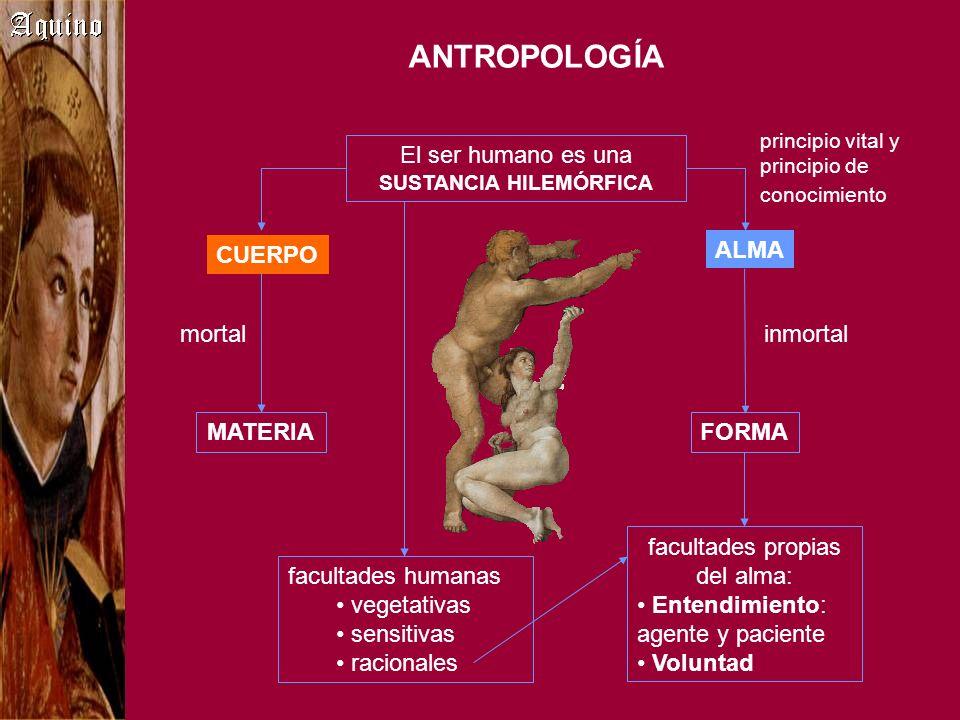 ANTROPOLOGÍA El ser humano es una SUSTANCIA HILEMÓRFICA CUERPO ALMA principio vital y principio de conocimiento facultades humanas vegetativas sensiti