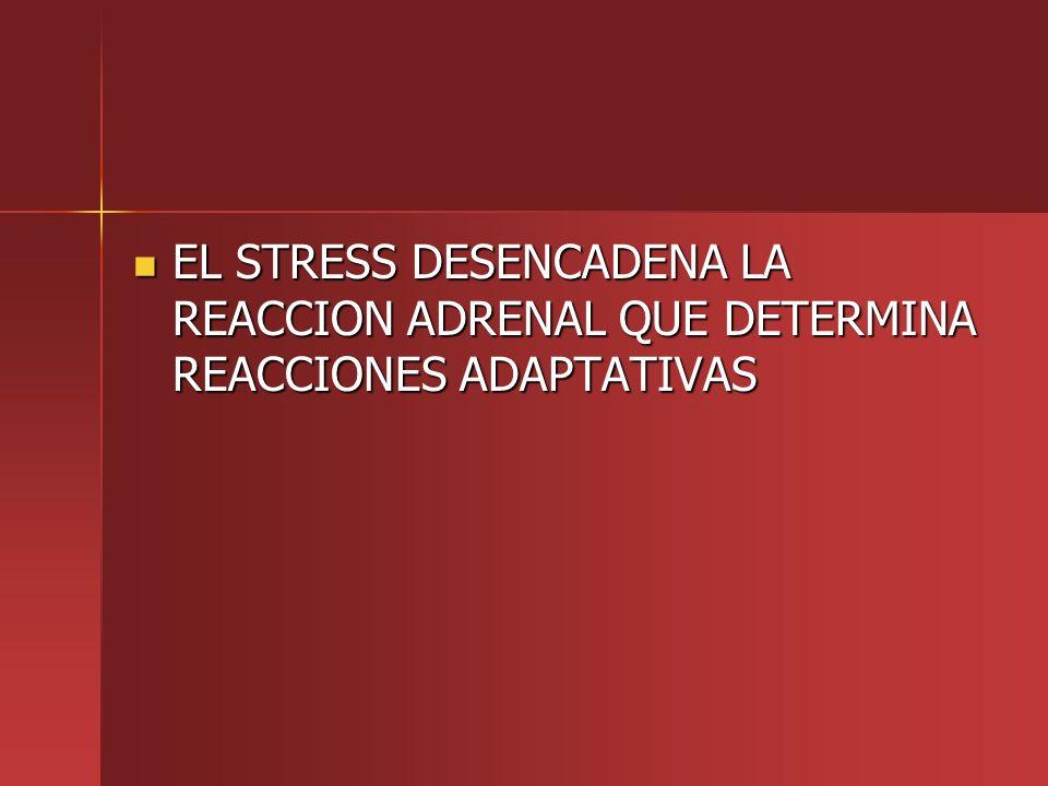 EL STRESS DESENCADENA LA REACCION ADRENAL QUE DETERMINA REACCIONES ADAPTATIVAS EL STRESS DESENCADENA LA REACCION ADRENAL QUE DETERMINA REACCIONES ADAP