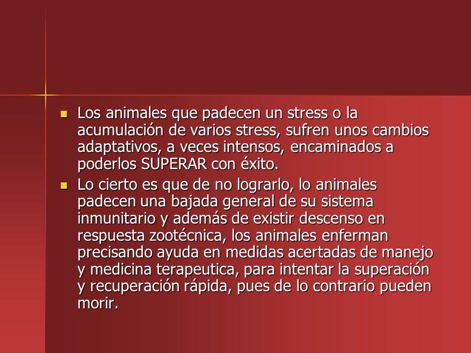Los animales que padecen un stress o la acumulación de varios stress, sufren unos cambios adaptativos, a veces intensos, encaminados a poderlos SUPERA