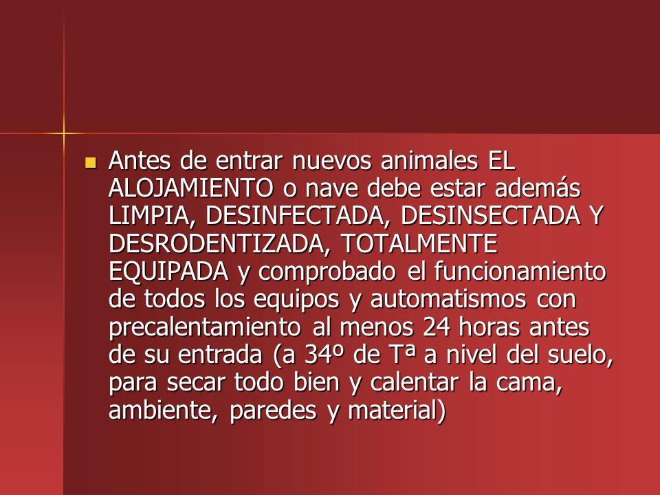 Antes de entrar nuevos animales EL ALOJAMIENTO o nave debe estar además LIMPIA, DESINFECTADA, DESINSECTADA Y DESRODENTIZADA, TOTALMENTE EQUIPADA y com