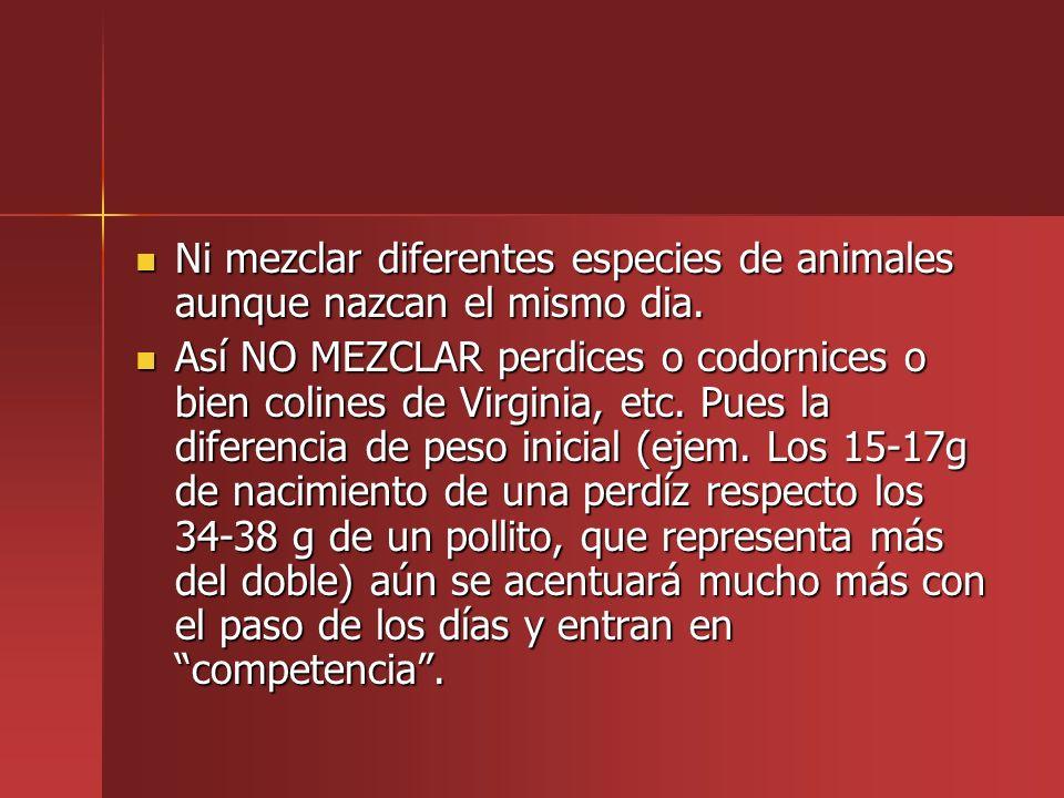 Ni mezclar diferentes especies de animales aunque nazcan el mismo dia. Ni mezclar diferentes especies de animales aunque nazcan el mismo dia. Así NO M