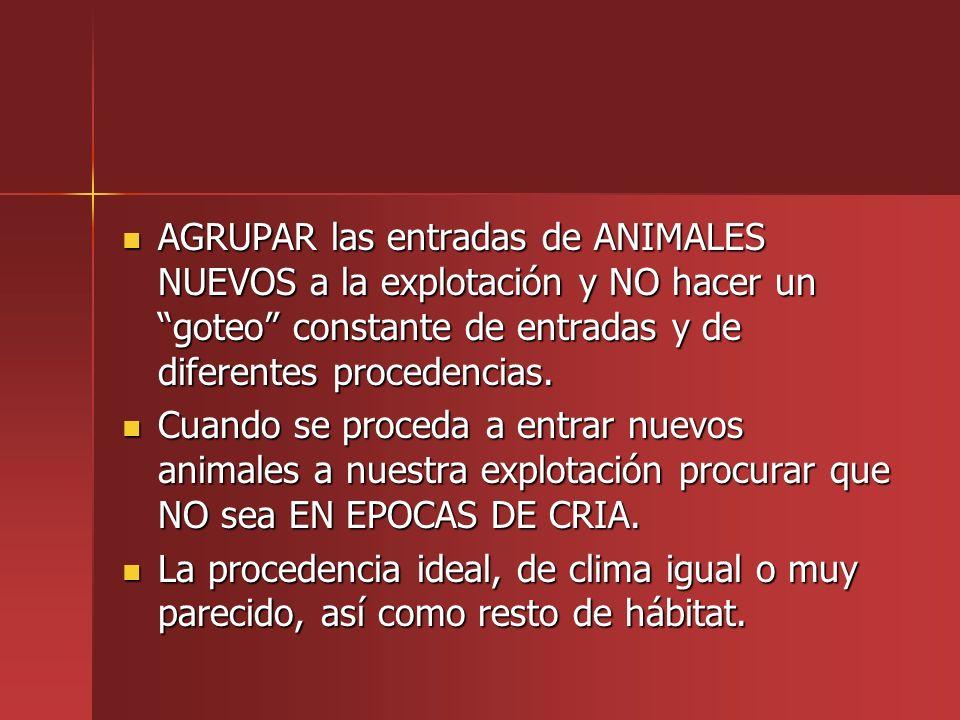 AGRUPAR las entradas de ANIMALES NUEVOS a la explotación y NO hacer un goteo constante de entradas y de diferentes procedencias. AGRUPAR las entradas