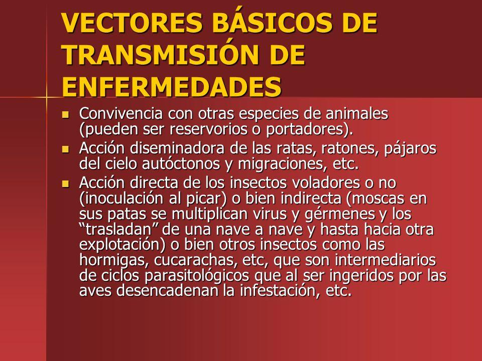 VECTORES BÁSICOS DE TRANSMISIÓN DE ENFERMEDADES Convivencia con otras especies de animales (pueden ser reservorios o portadores). Convivencia con otra