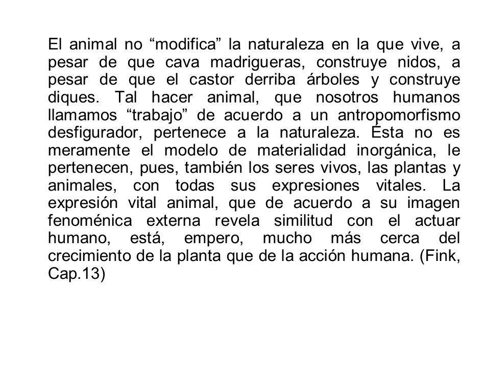El animal no modifica la naturaleza en la que vive, a pesar de que cava madrigueras, construye nidos, a pesar de que el castor derriba árboles y construye diques.