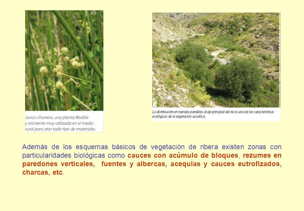 Además de los esquemas básicos de vegetación de ribera existen zonas con particularidades biológicas como cauces con acúmulo de bloques, rezumes en pa
