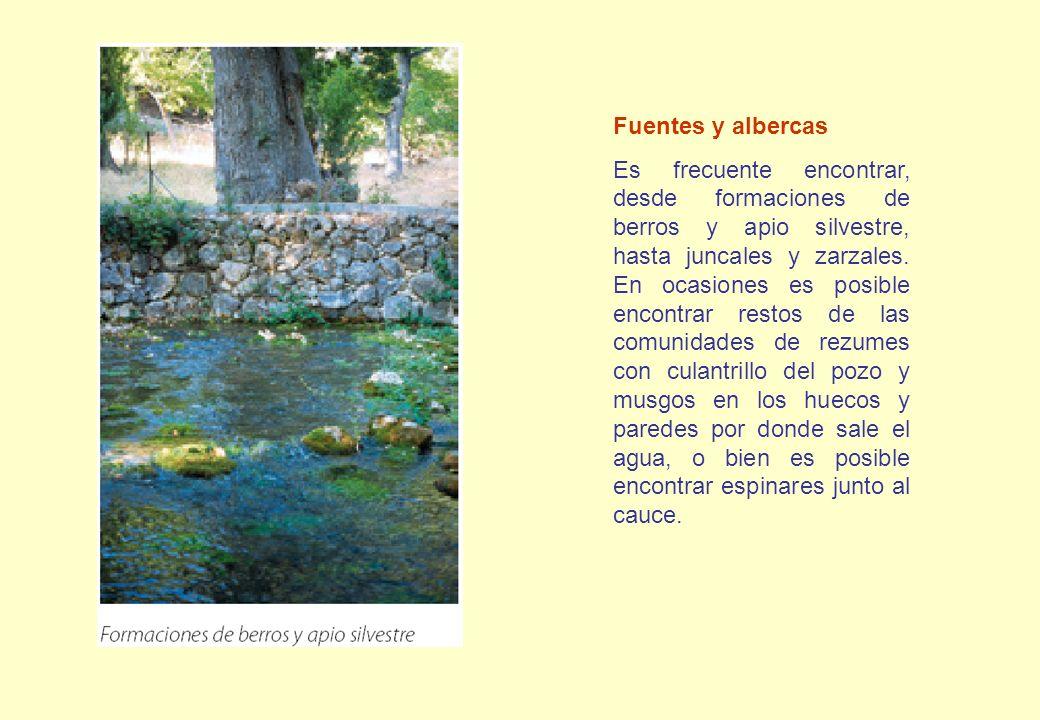 Fuentes y albercas Es frecuente encontrar, desde formaciones de berros y apio silvestre, hasta juncales y zarzales. En ocasiones es posible encontrar