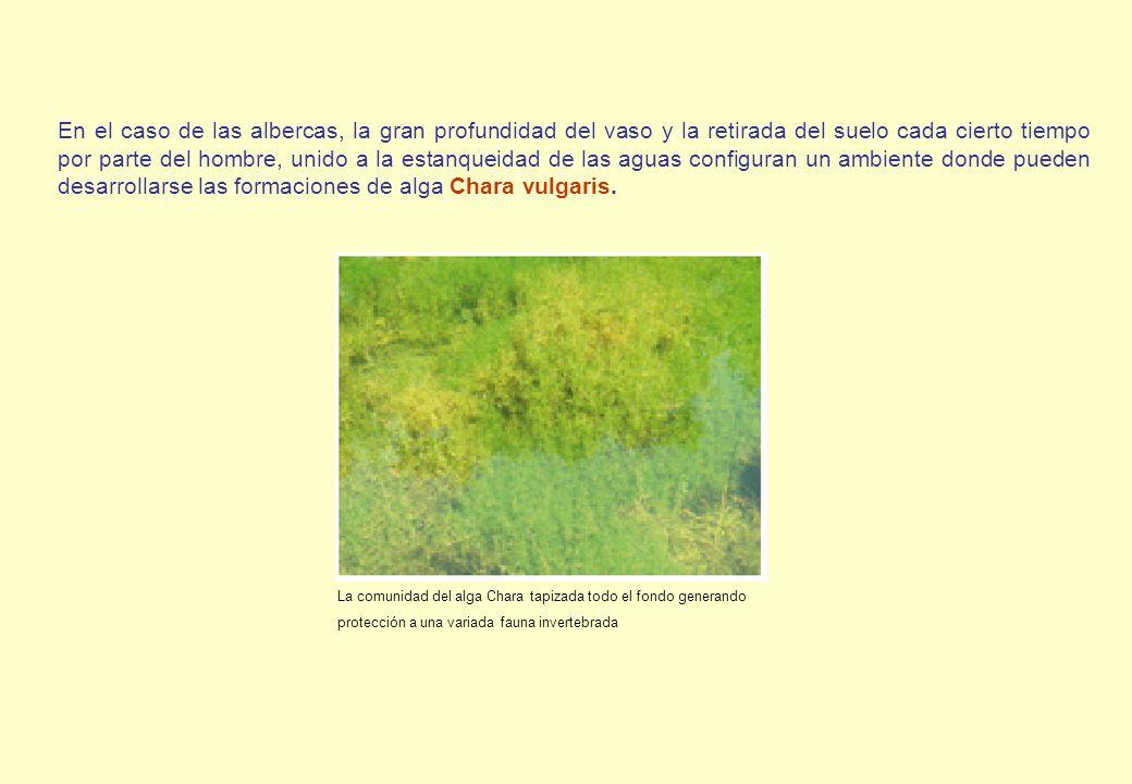 En el caso de las albercas, la gran profundidad del vaso y la retirada del suelo cada cierto tiempo por parte del hombre, unido a la estanqueidad de l