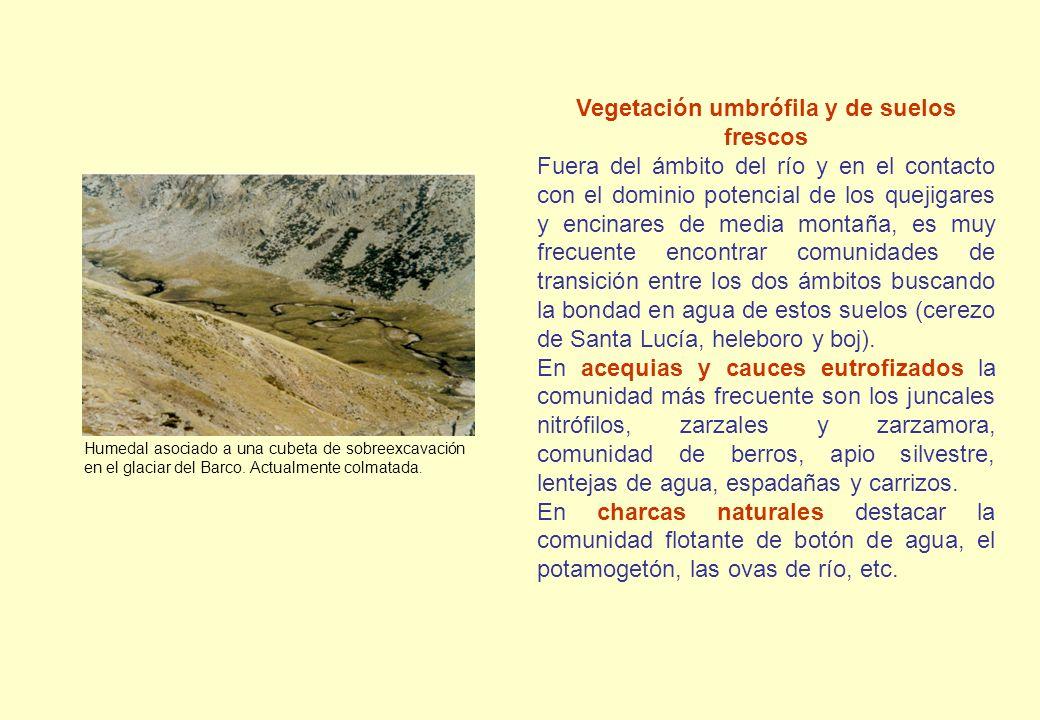 Humedal asociado a una cubeta de sobreexcavación en el glaciar del Barco. Actualmente colmatada. Vegetación umbrófila y de suelos frescos Fuera del ám
