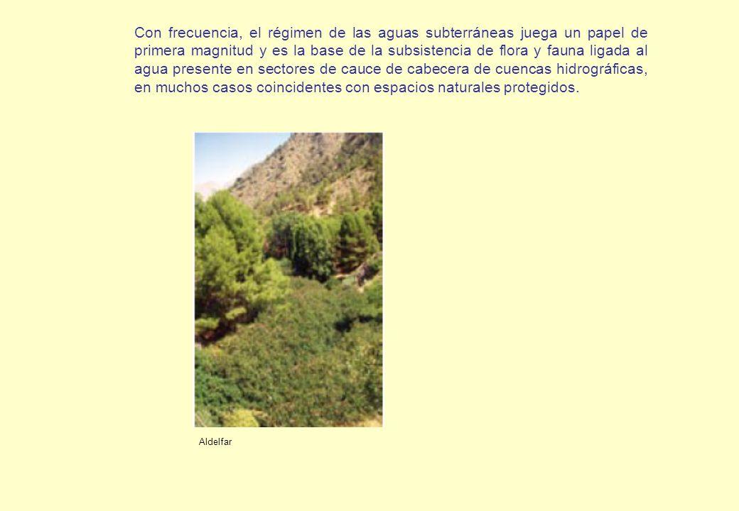 Con frecuencia, el régimen de las aguas subterráneas juega un papel de primera magnitud y es la base de la subsistencia de flora y fauna ligada al agu