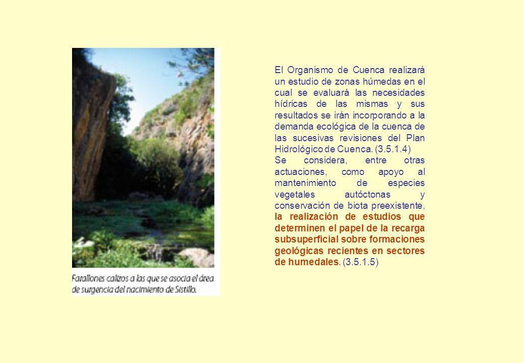 El Organismo de Cuenca realizará un estudio de zonas húmedas en el cual se evaluará las necesidades hídricas de las mismas y sus resultados se irán in