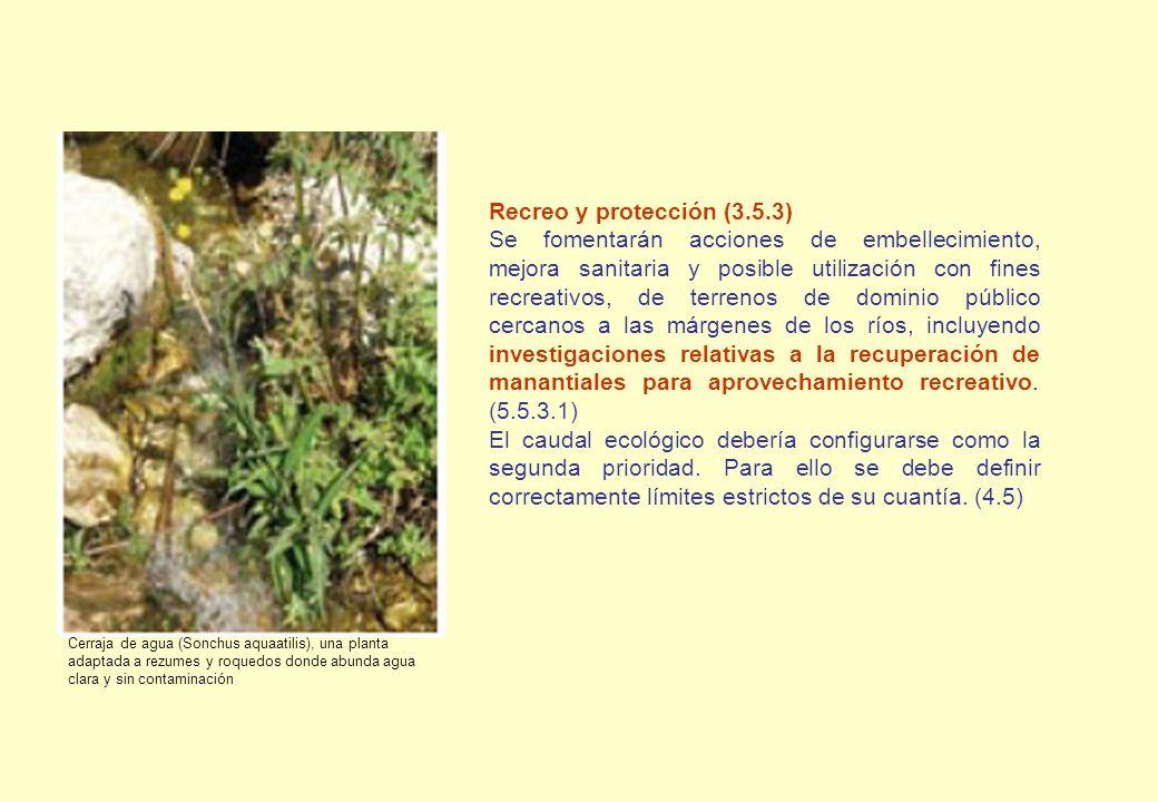 Recreo y protección (3.5.3) Se fomentarán acciones de embellecimiento, mejora sanitaria y posible utilización con fines recreativos, de terrenos de do