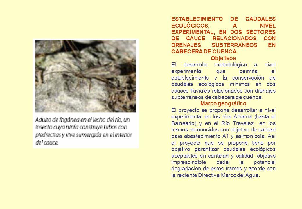 ESTABLECIMIENTO DE CAUDALES ECOLÓGICOS, A NIVEL EXPERIMENTAL, EN DOS SECTORES DE CAUCE RELACIONADOS CON DRENAJES SUBTERRÁNEOS EN CABECERA DE CUENCA. O
