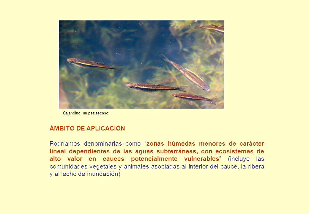 Incluiría sectores de cabecera de Cuenca en muchos casos coincidentes con ecosistemas de especial interés (clase salmonícola) donde los cauces son especialmente sensibles por su reducido caudal (entre 20-500 l/s).
