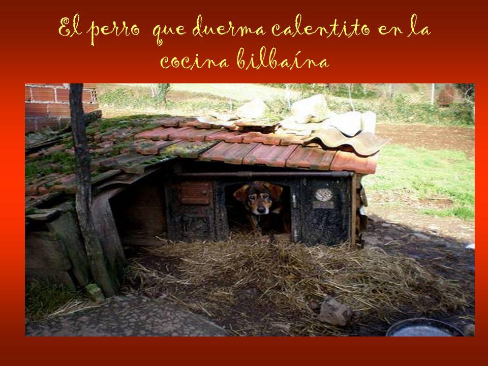 El perro que duerma calentito en la cocina bilbaína