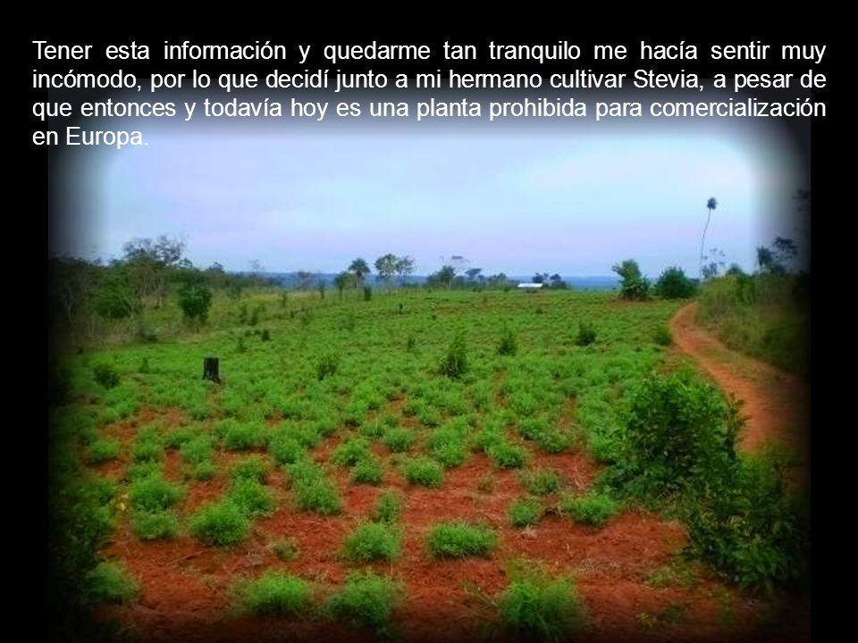 Esta multinacional, además de criminalizar a la Stevia para evitar la competencia con el Aspartamo, producía y produce semillas transgénicas, mediante las cuales contamina vía polinización todas las demás variedades de uso libre por los payeses.