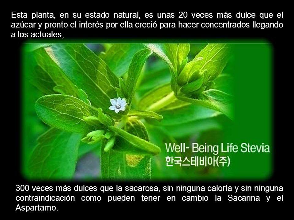 La Stevia es una planta originaria de Paraguay, descubierta ya hace más de un siglo por el naturalista Moisés Bertoni, y de uso milenario por los guaranís, habitantes indígenas de Paraguay.