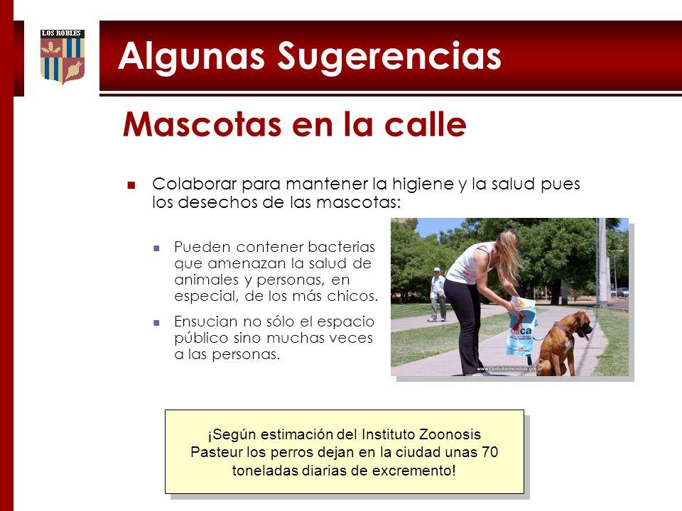 Mascotas en la calle Algunas Sugerencias ¡Según estimación del Instituto Zoonosis Pasteur los perros dejan en la ciudad unas 70 toneladas diarias de e