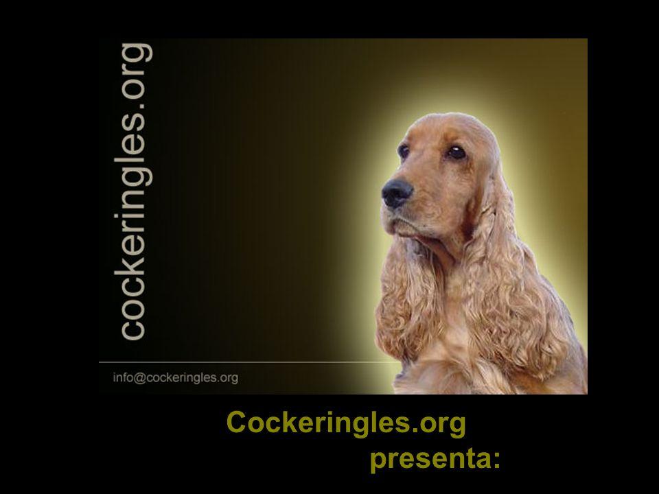 EL COCKER SPANIEL INGLES