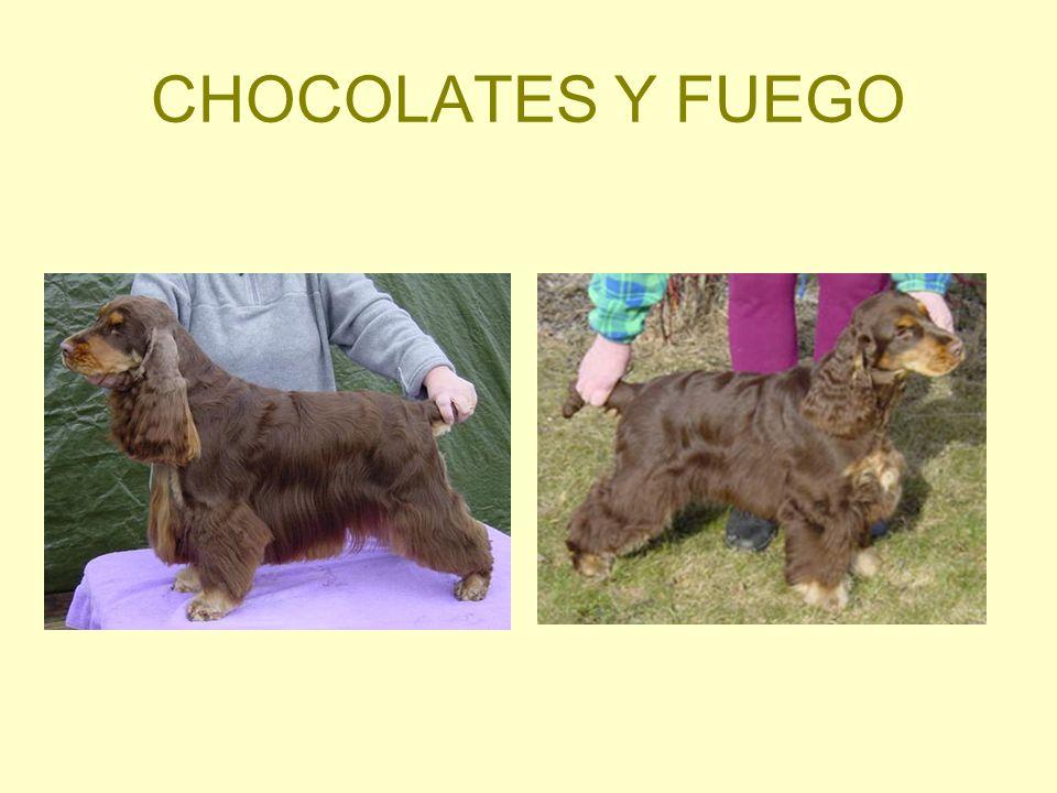 CHOCOLATES Y FUEGO