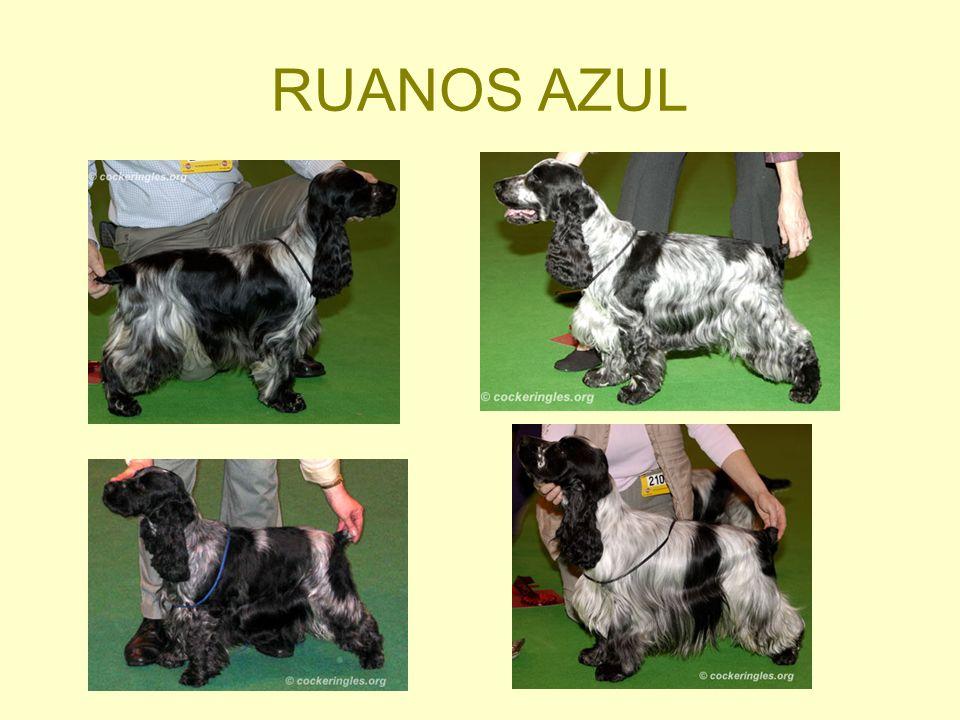 RUANOS AZUL