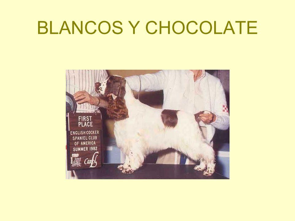 BLANCOS Y CHOCOLATE