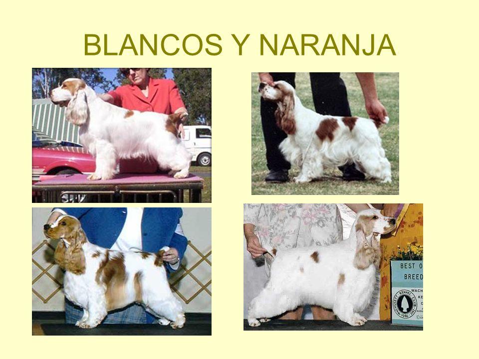 BLANCOS Y NARANJA
