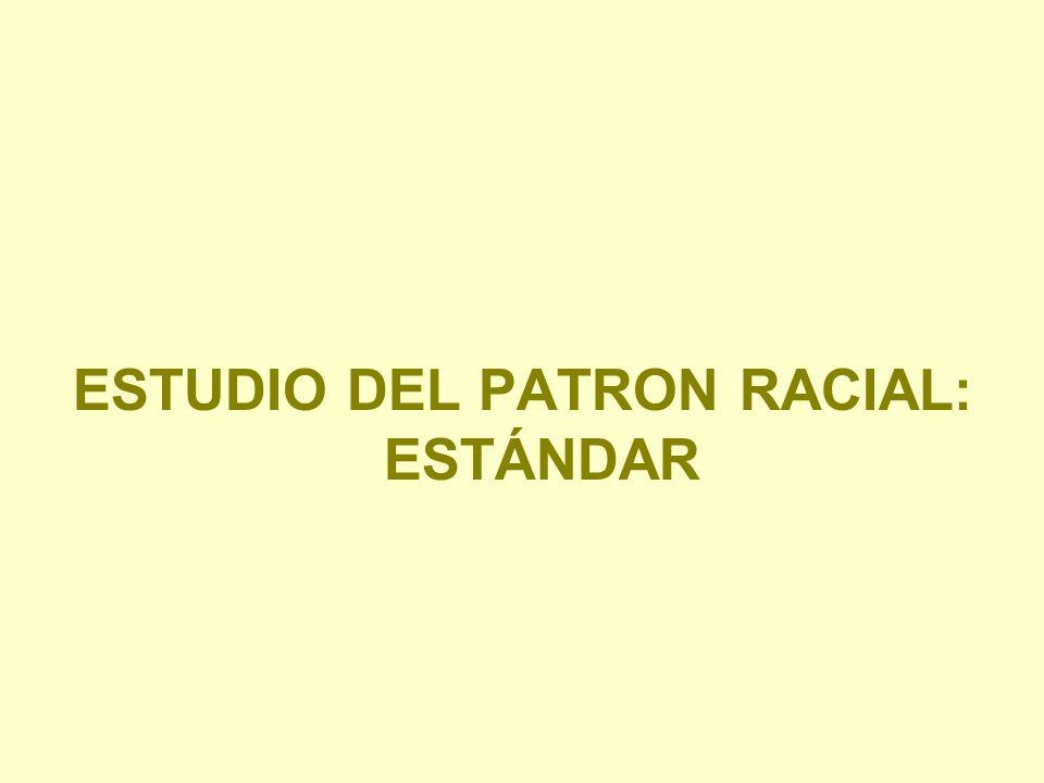 ESTUDIO DEL PATRON RACIAL: ESTÁNDAR