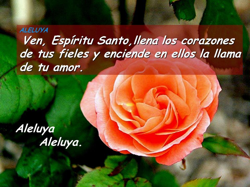 ALELUYA Ven, Espíritu Santo,llena los corazones de tus fieles y enciende en ellos la llama de tu amor.