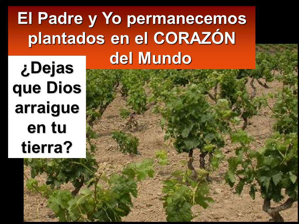 El Padre y Yo permanecemos plantados en el CORAZÓN del Mundo ¿Dejas que Dios arraigue en tu tierra?