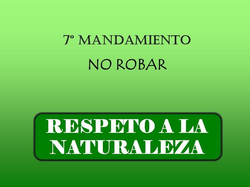 7º Mandamiento NO ROBAR RESPETO A LA NATURALEZA