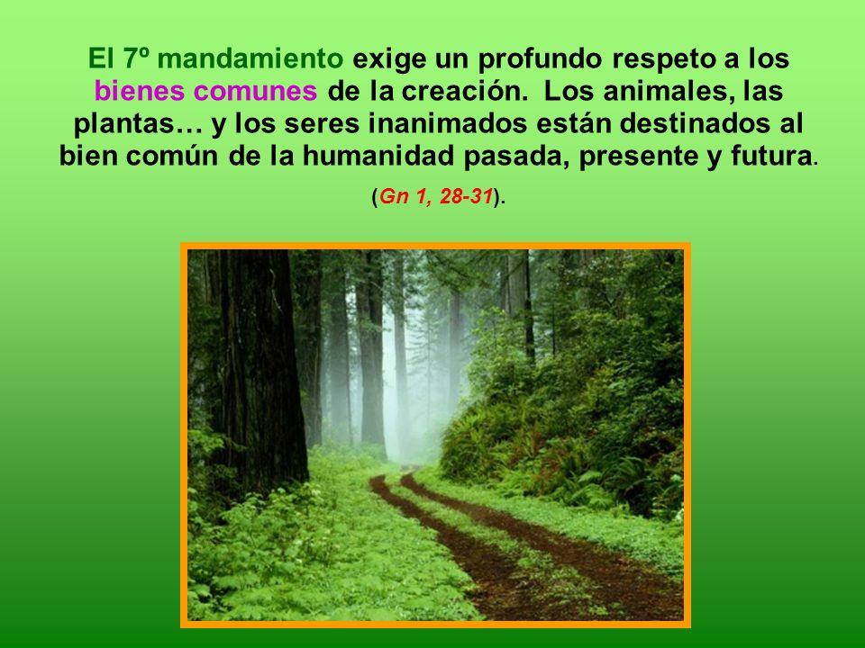El 7º mandamiento exige un profundo respeto a los bienes comunes de la creación.