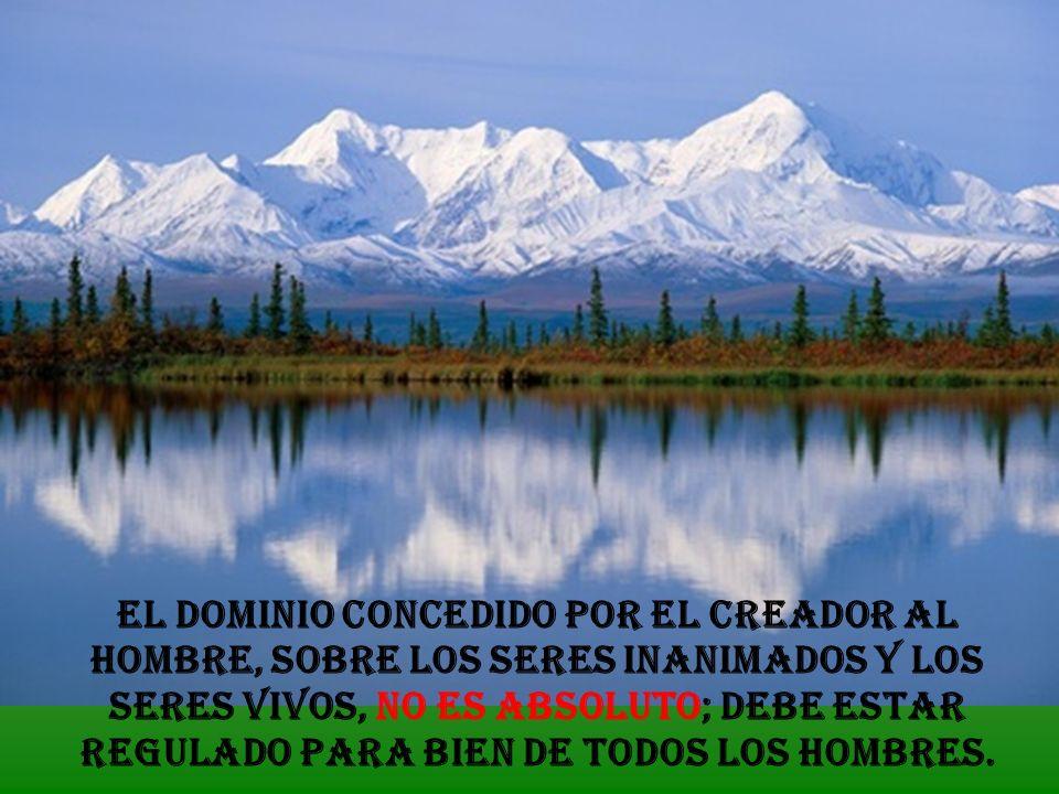El 7º mandamiento exige un profundo respeto a los bienes comunes de la creación. Los animales, las plantas… y los seres inanimados están destinados al