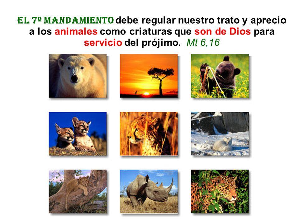 El 7º mandamiento debe regular nuestro trato y aprecio a los animales como criaturas que son de Dios para servicio del prójimo.