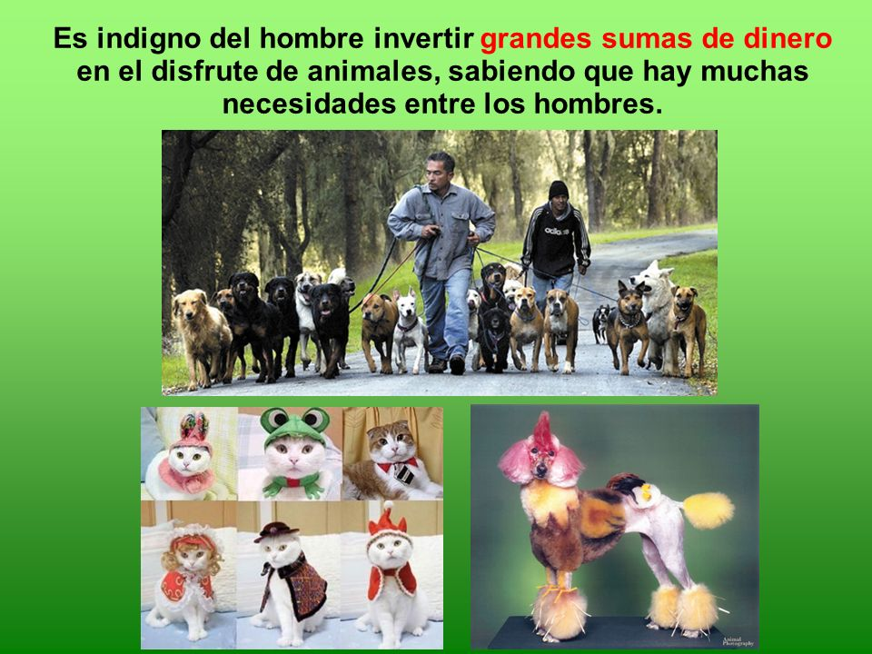 Es indigno del hombre invertir grandes sumas de dinero en el disfrute de animales, sabiendo que hay muchas necesidades entre los hombres.