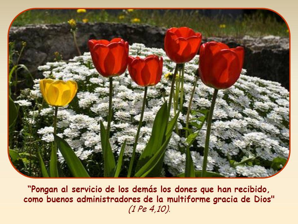 Pongan al servicio de los demás los dones que han recibido, como buenos administradores de la multiforme gracia de Dios (1 Pe 4,10).
