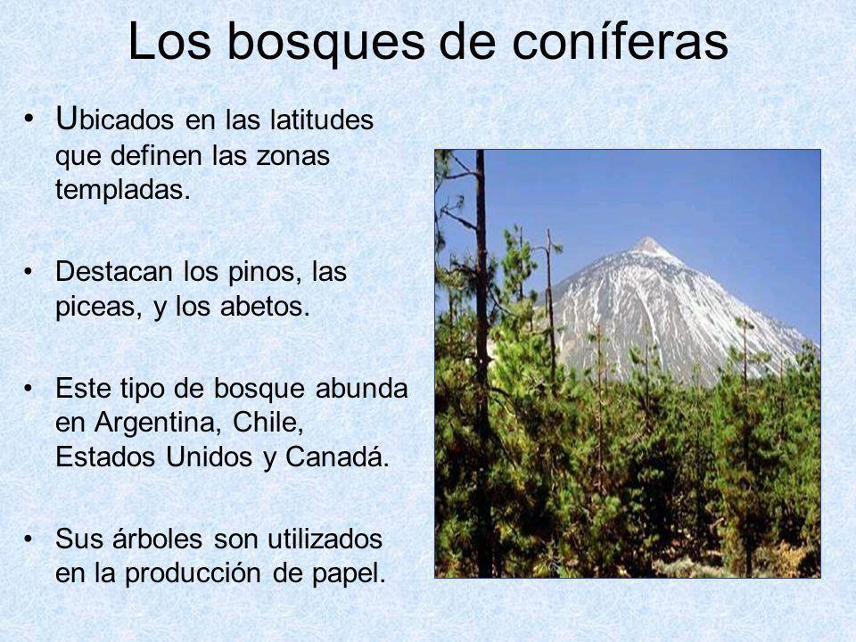Los bosques de coníferas U bicados en las latitudes que definen las zonas templadas. Destacan los pinos, las piceas, y los abetos. Este tipo de bosque