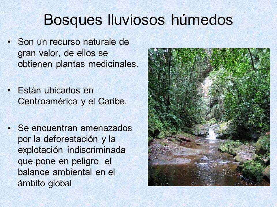 Bosques lluviosos húmedos Son un recurso naturale de gran valor, de ellos se obtienen plantas medicinales. Están ubicados en Centroamérica y el Caribe