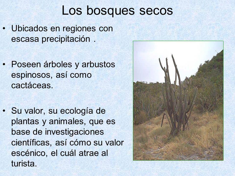 Los bosques secos Ubicados en regiones con escasa precipitación. Poseen árboles y arbustos espinosos, así como cactáceas. Su valor, su ecología de pla