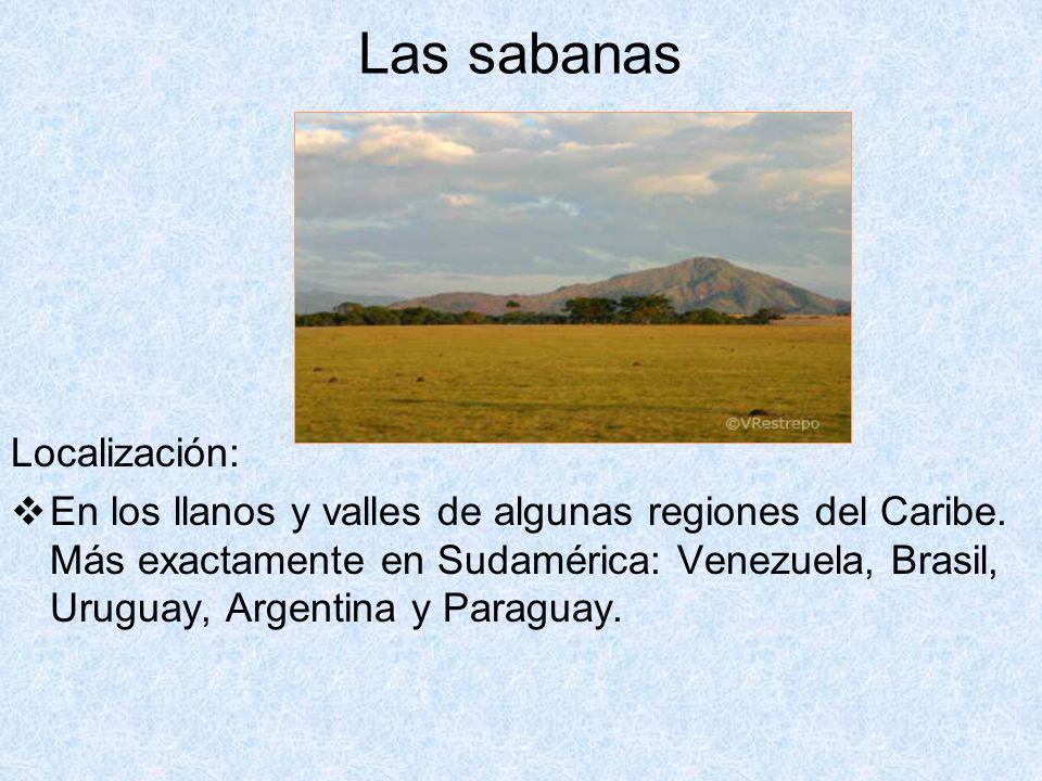 Las sabanas Localización: En los llanos y valles de algunas regiones del Caribe. Más exactamente en Sudamérica: Venezuela, Brasil, Uruguay, Argentina