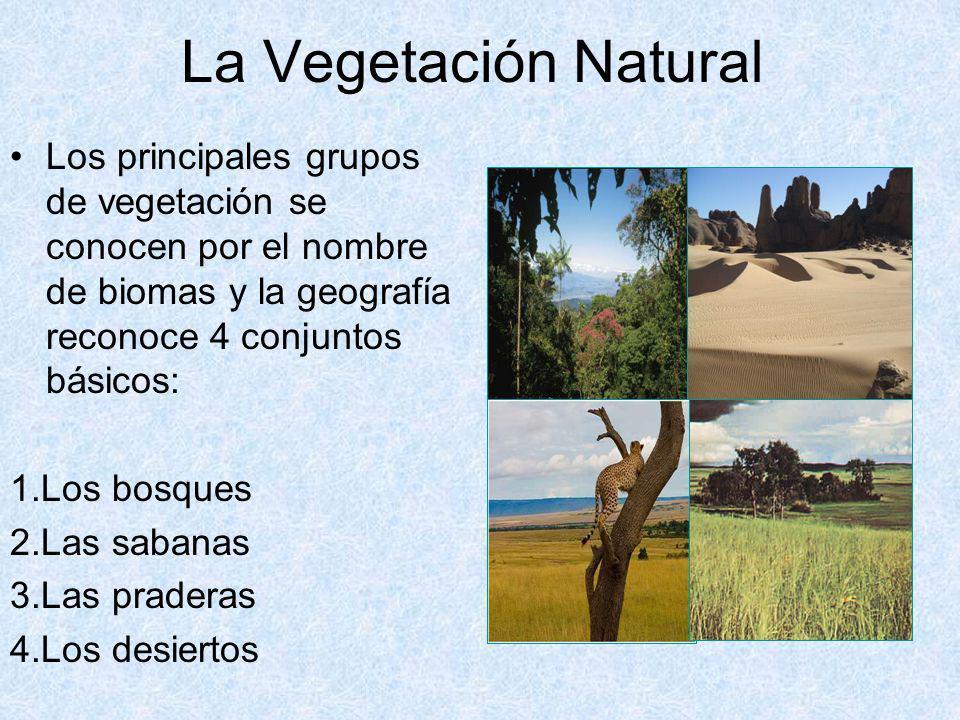 La Vegetación Natural Los principales grupos de vegetación se conocen por el nombre de biomas y la geografía reconoce 4 conjuntos básicos: 1.Los bosqu