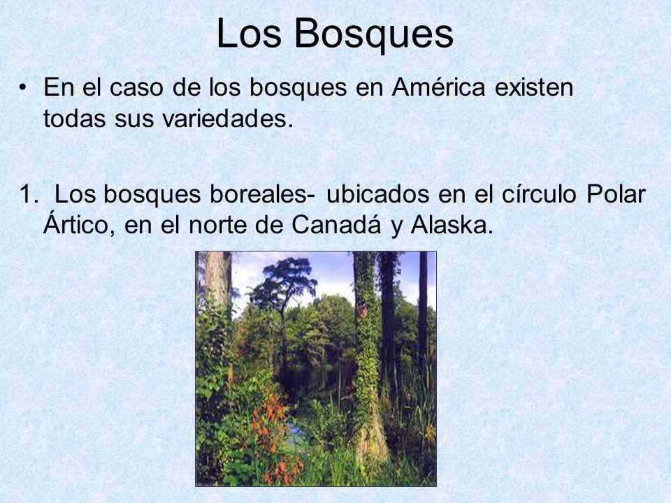 Los Bosques En el caso de los bosques en América existen todas sus variedades. 1. Los bosques boreales- ubicados en el círculo Polar Ártico, en el nor