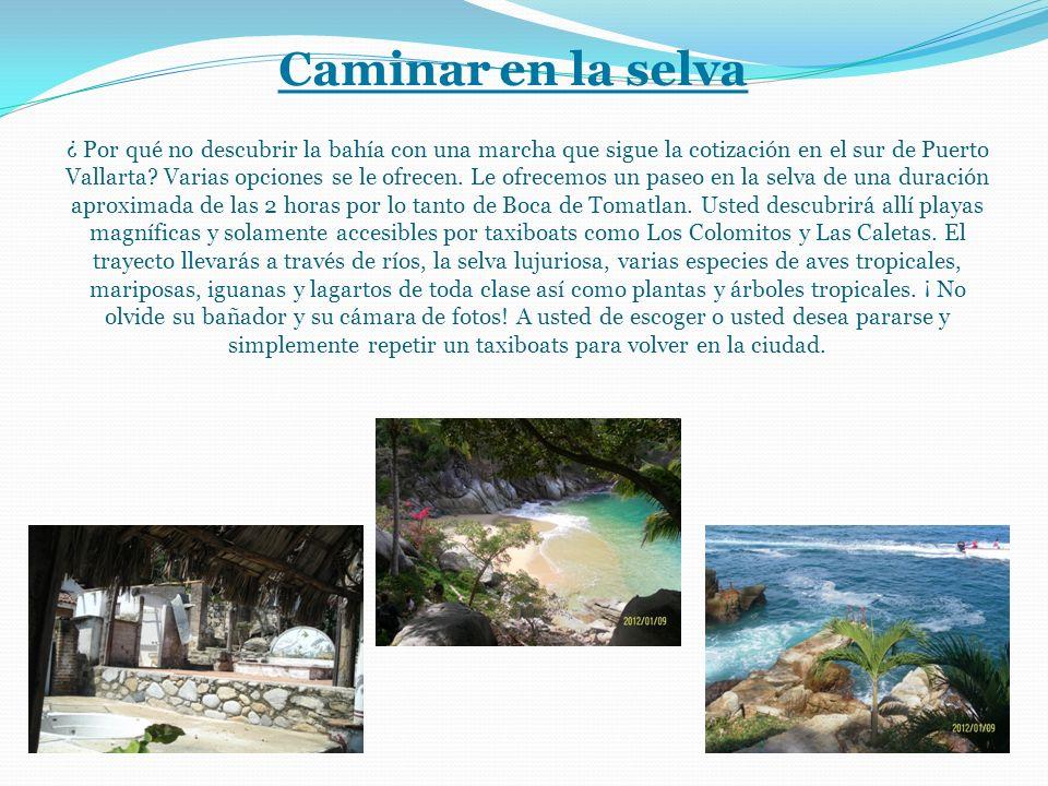 Caminar en la selva ¿ Por qué no descubrir la bahía con una marcha que sigue la cotización en el sur de Puerto Vallarta.