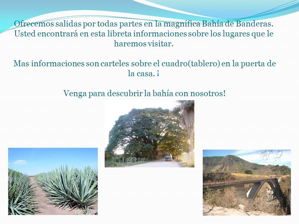 Ofrecemos salidas por todas partes en la magnífica Bahía de Banderas.