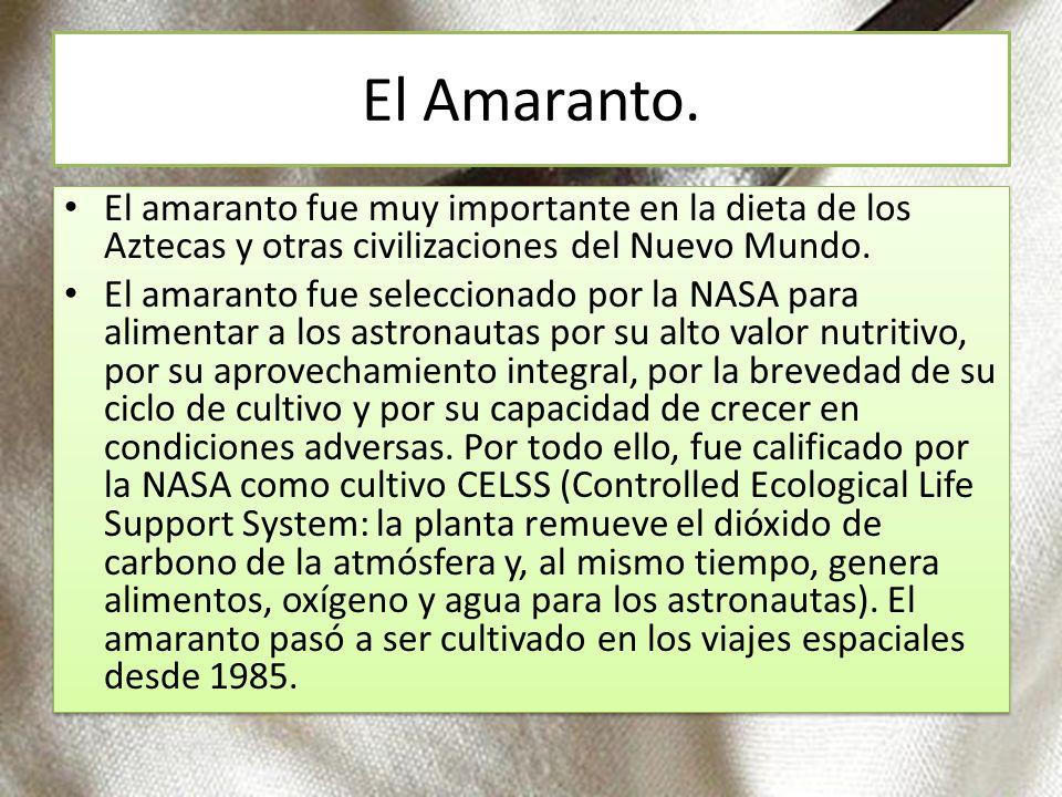 El Amaranto. El amaranto fue muy importante en la dieta de los Aztecas y otras civilizaciones del Nuevo Mundo. El amaranto fue seleccionado por la NAS