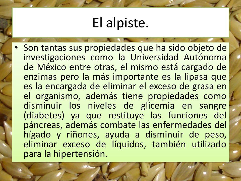 El alpiste. Son tantas sus propiedades que ha sido objeto de investigaciones como la Universidad Autónoma de México entre otras, el mismo está cargado