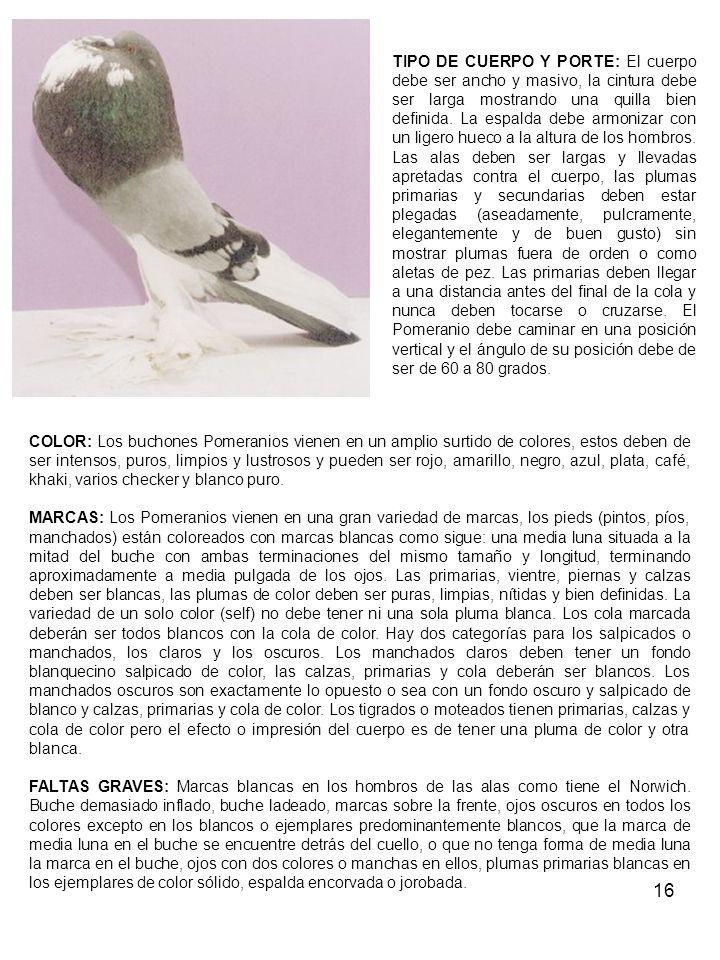 16 TIPO DE CUERPO Y PORTE: El cuerpo debe ser ancho y masivo, la cintura debe ser larga mostrando una quilla bien definida.